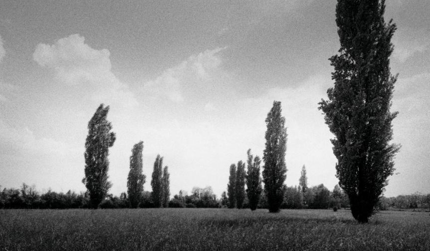 bottega-veneta-parco-palladiano_004