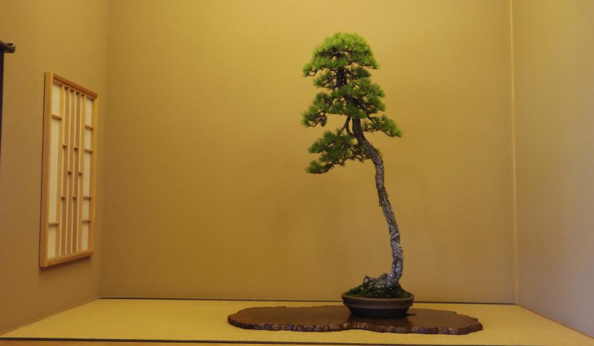hirao-bonsai_004