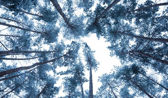 18_【星のや富士】冬の森イメージ②