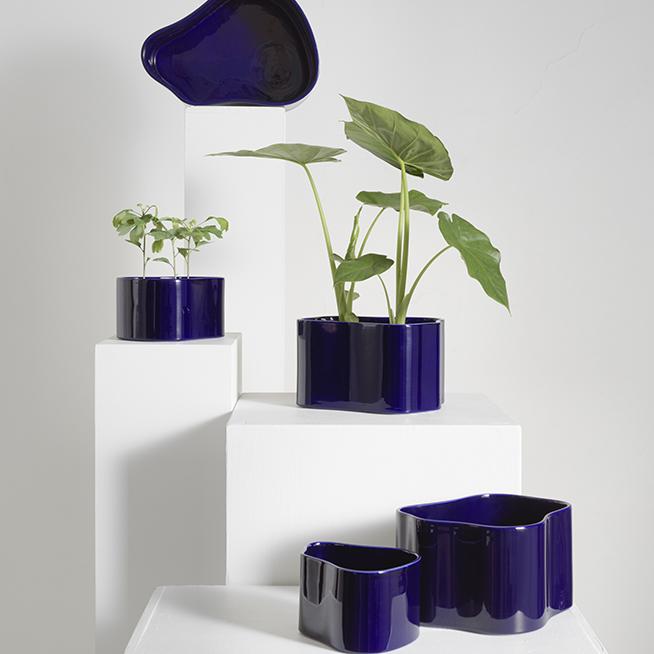 riihitie-plant_005