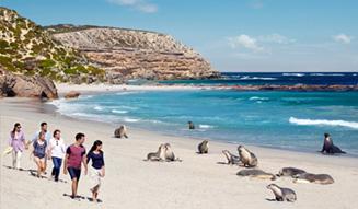 Seal Bay Conservation Park, Kangaroo Island, SA