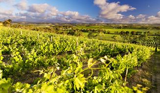 d'Arenberg Winery, McLaren Vale, SA