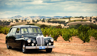 327-31-Summer vineyards and the Daimler (1)