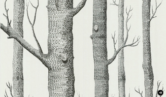 Woods_white327