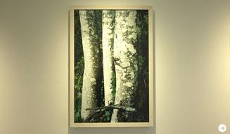ホンマタカシ|その森の子供 02