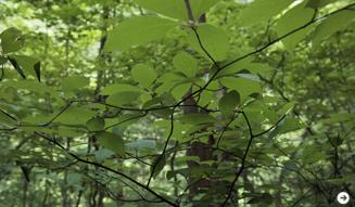 森の神に会う旅 03
