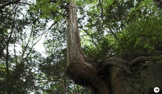森の神に会う旅 04
