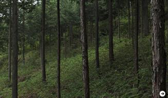 森の神に会う旅 Chapter3 22