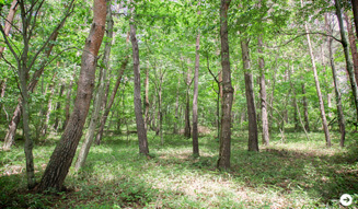 more trees×LOUIS VUITTON 10