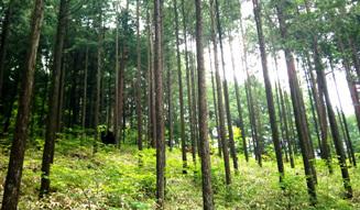 more trees organic|森を育むオーガニックコスメ02