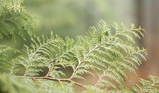 more trees organic|森を育むオーガニックコスメ03