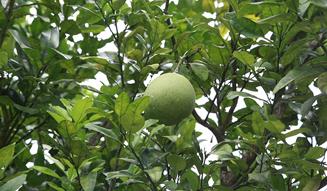 モア・トゥリーズが進めるフィリピン・キリノ州でのチャレンジ|more trees 06