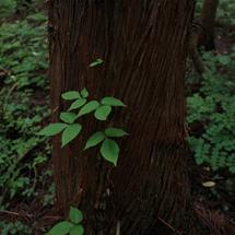 第3回「森林セラピーのすすめ」 09