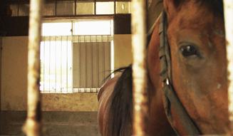 『祭の馬』 02