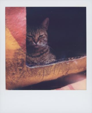 猫守よしお 写真展