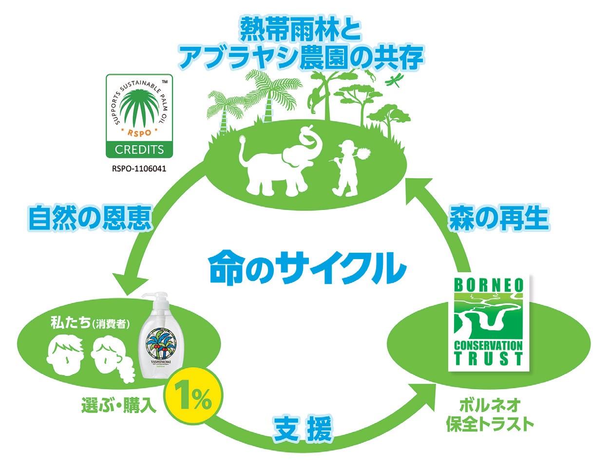 手肌と地球にやさしい食器用洗剤「ヤシノミ洗剤」原料調達から排水後の環境まで全てを考え抜く(2019年11月号)