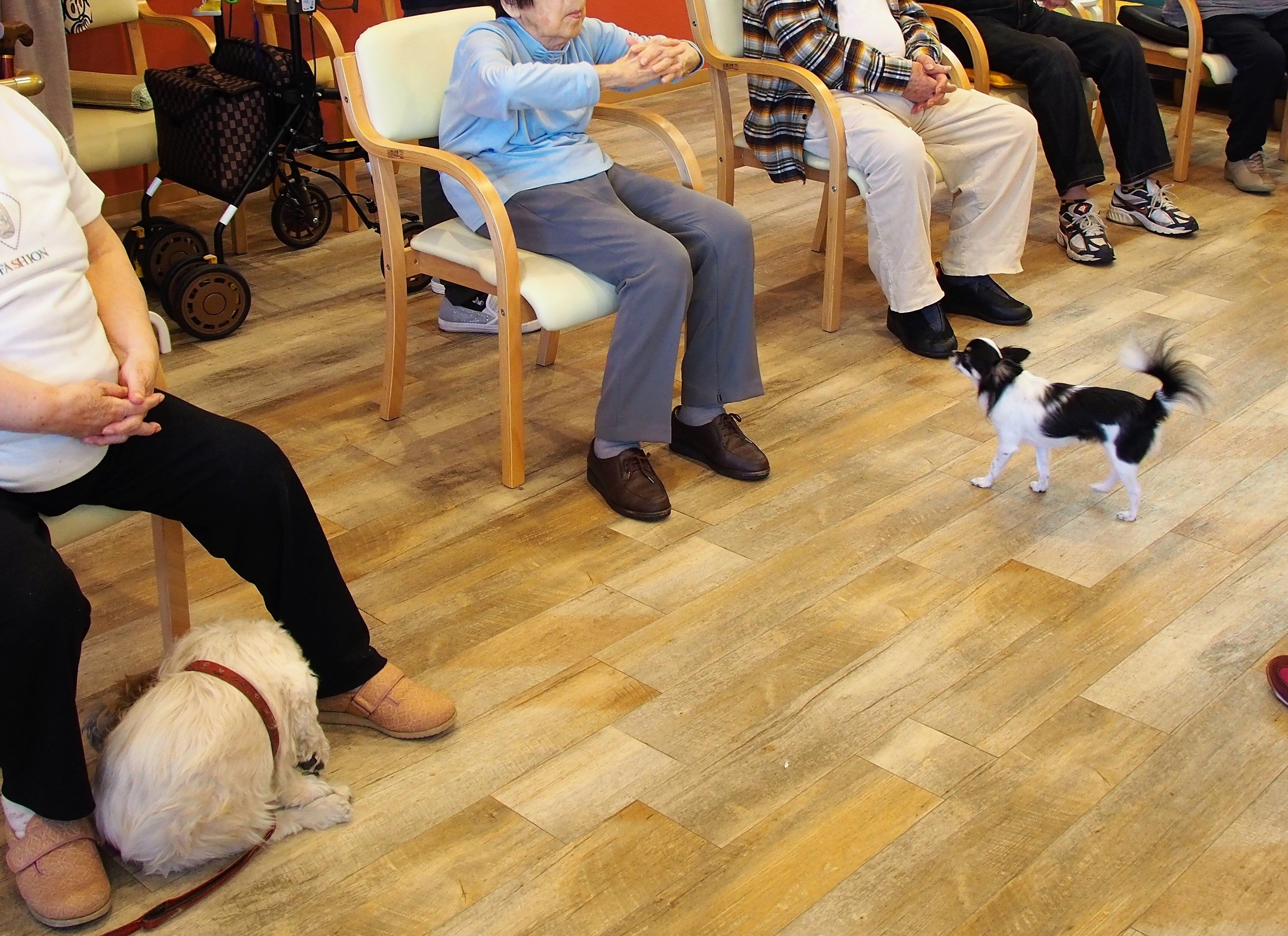 【特集】ペット共生型福祉施設で人も動物も幸せに。 犬と過ごすデイサービス&障がい者グループホーム 「わおん」(2018年12月号)