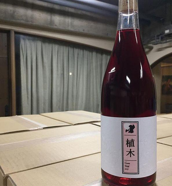 """Takuro Koga on Instagram: """"【Coming soon!】 3/20(火)よりQuruto店頭にて、 キュヴェ植木2017を販売致します。 (※キュヴェ玉名とは違うワインです) (※3/21も祝日ですが通常営業します) 熊本市北区植木町産のキャンベルを使用。 生産本数は465本。…"""" (9012)"""