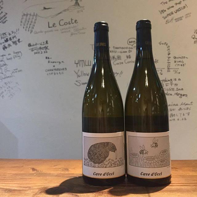 """Takuro Koga on Instagram: """"【新入荷ワインのご紹介①】 今週も続々とワインが入荷しますよ! カーブドッチさんのどうぶつシリーズからは、 もぐら(シャルドネ)とみつばち(シュナンブラン)。 もぐらは、柔らかく、まろーんとした味わい。 みつばちも、甘くないハチミツレモン的な味わい。…"""" (15703)"""