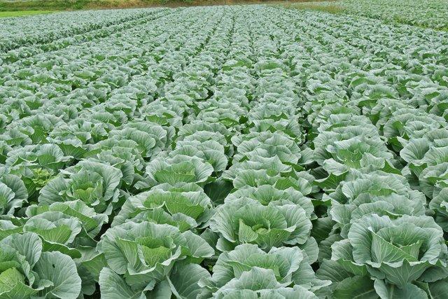 野菜の仕入れ価格予測サービスをリリース! 生産現場の衛星データのモニタリングや市場価格の機械学習を活用