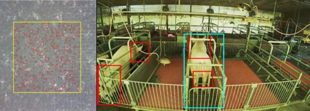 IoTデータ活用を通じた「持続可能な養豚繁殖モデル」の実証実験が開始 農場現場でのデジタル化の有効性を検証へ