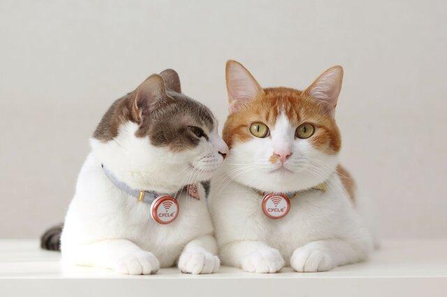猫の身体活動・睡眠の評価にIoTサービスが有用であるとの論文が掲載 猫の健康管理に活用へ