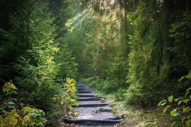 Forest Away Path - Free photo on Pixabay (366)