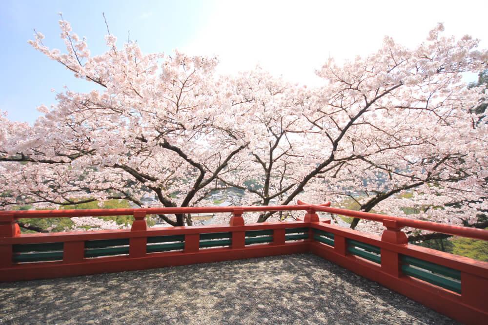 佐賀県の桜の名所20選!地域別に厳選してご紹介