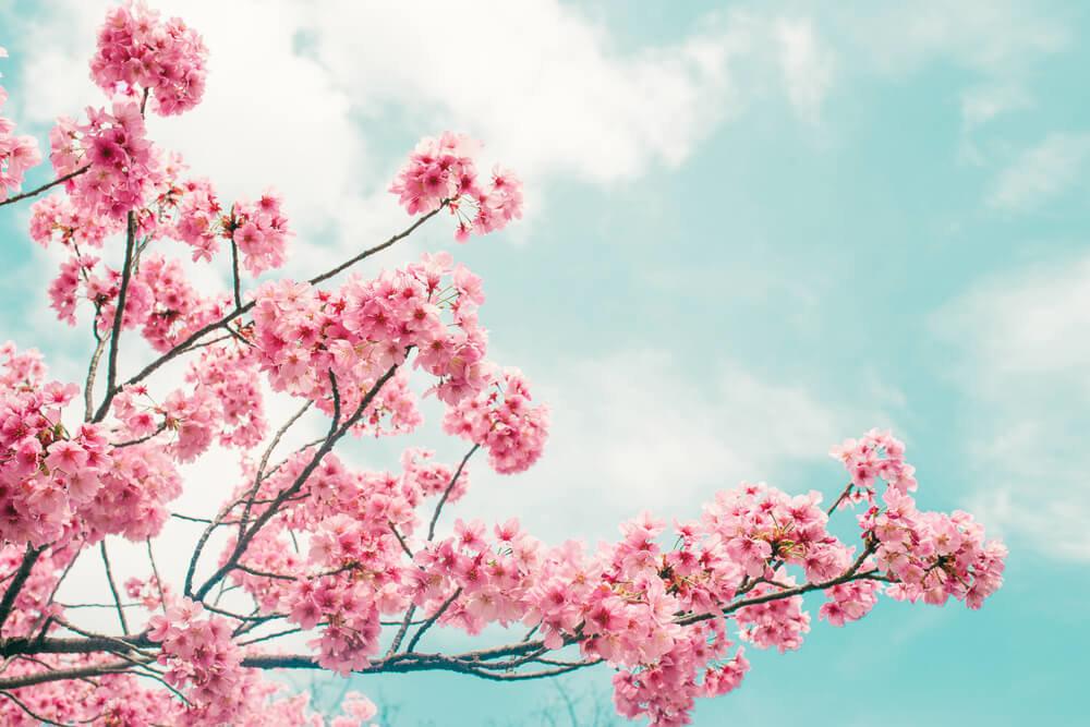 仙台市内の桜の名所20選!地域ごとの桜の満開スポットを紹介