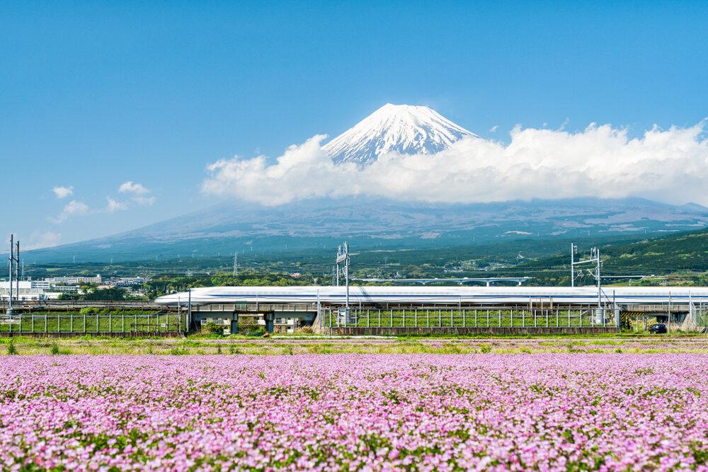 静岡の人気お土産11選!おすすめのショッピングスポットも紹介