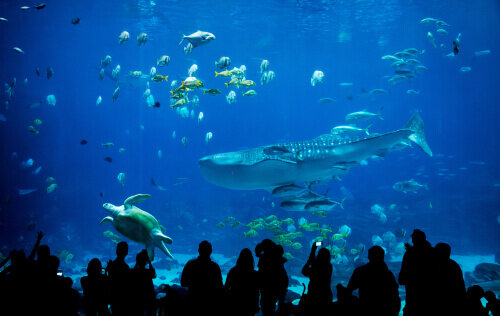 【関東】デートにおすすめの水族館8選!人気のショーや付帯施設も紹介