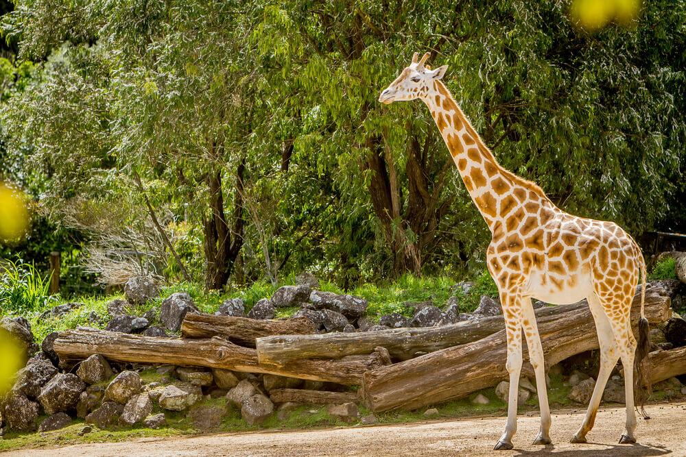 動物園デートのコーデ特集♡動きやすい&おしゃれ両立のポイントとは
