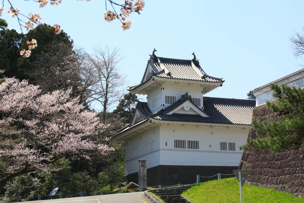 桜が咲く仙台城跡