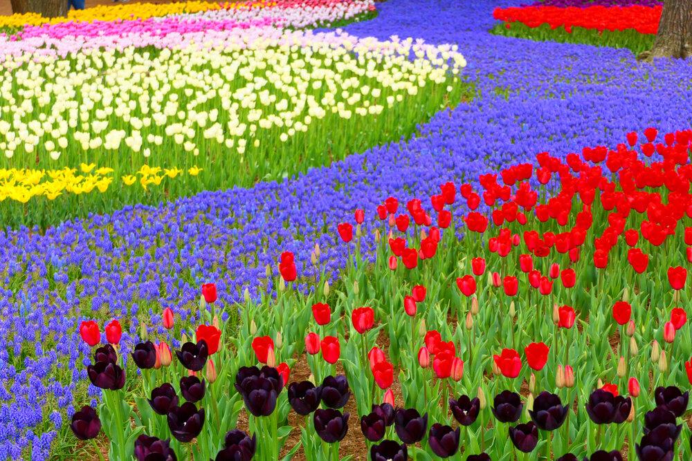 国営ひたち海浜公園の花
