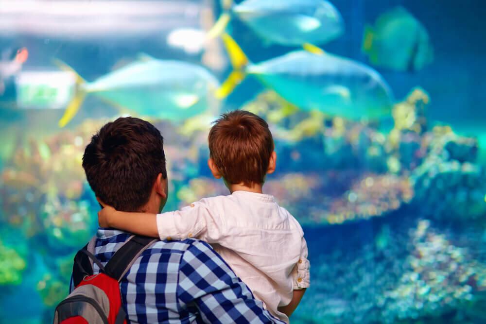 魚が泳ぐ水槽を眺める親子