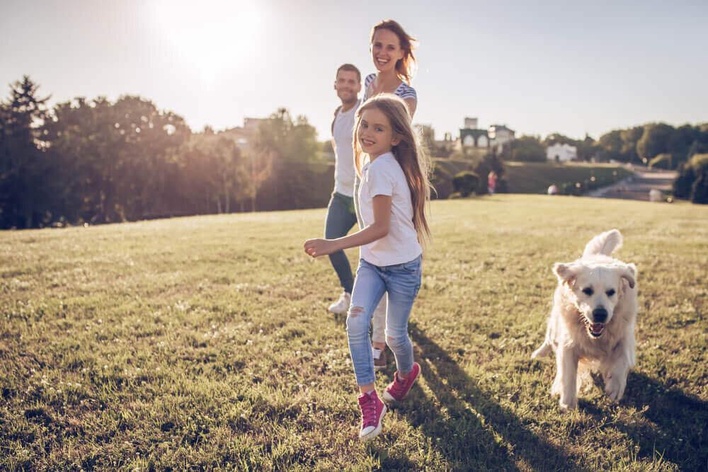 芝生の上を走る家族と犬
