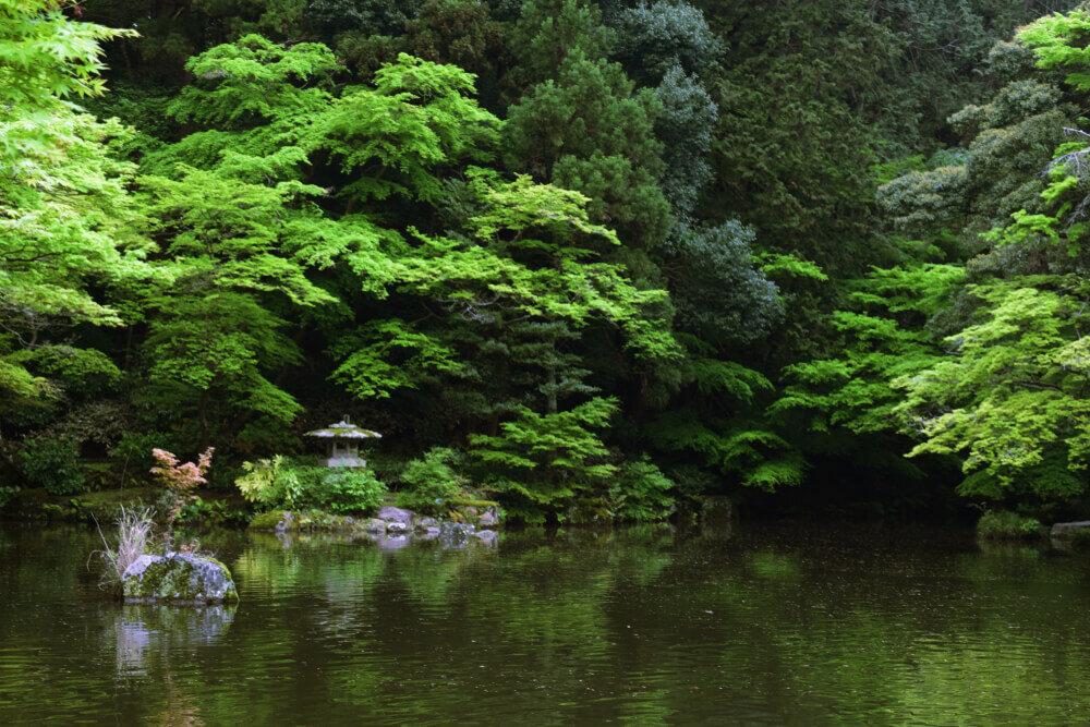 新緑が美しい池のほとり