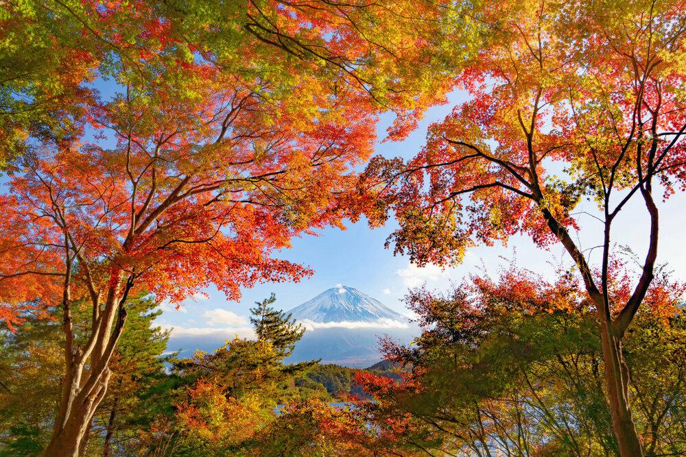紅葉の合間から見える富士山
