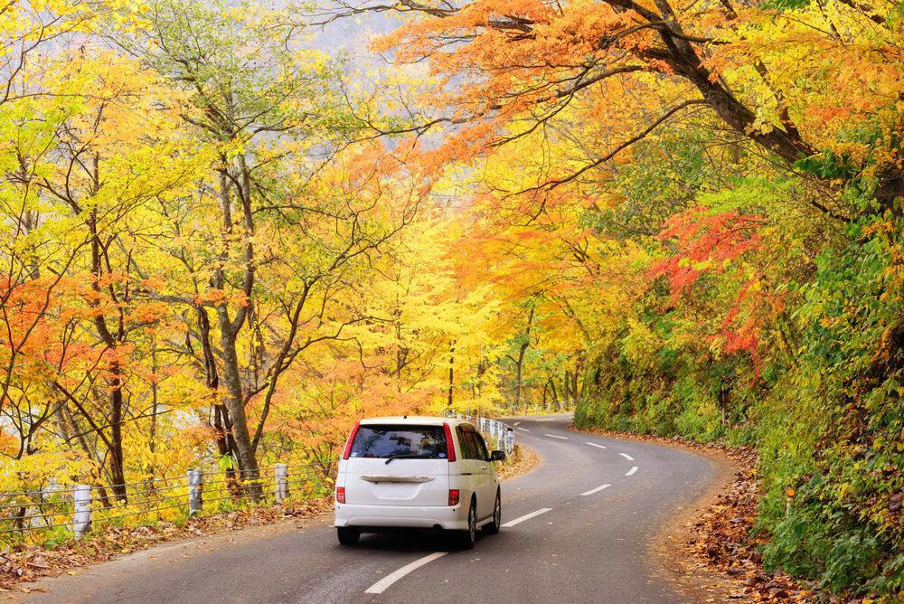 紅葉の見える道路を走る車