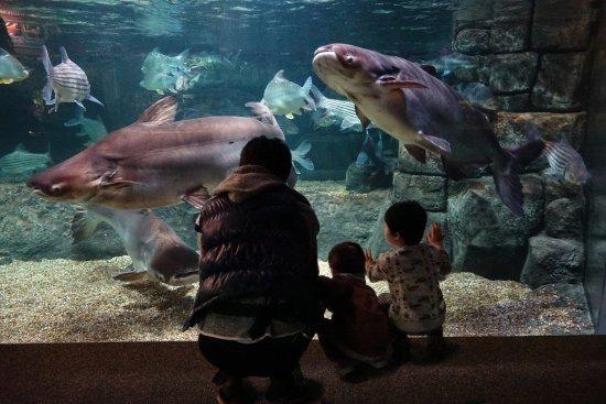 2019年 世界淡水魚園水族館 アクア・トト ぎふへ行く前に!見どころをチェック - トリップアドバイザー