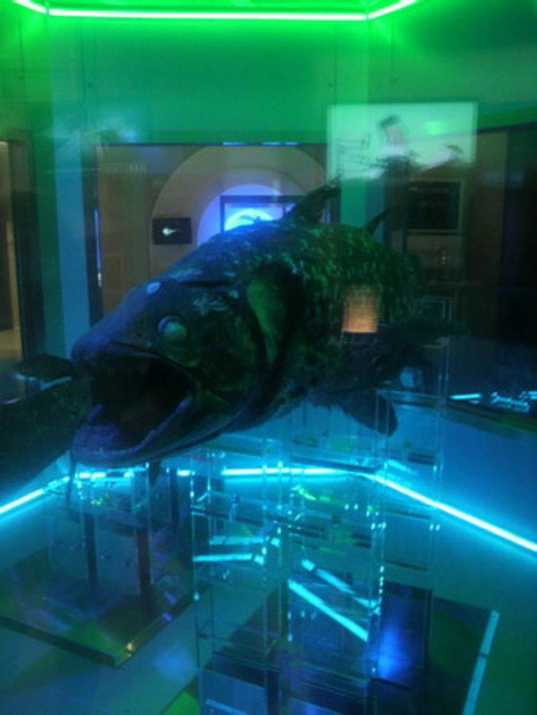 【沼津港深海水族館】アクセス・営業時間・料金情報 - じゃらんnet