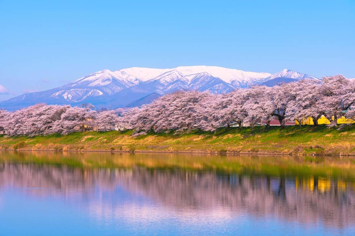 白石川堤一目千本桜の絶景