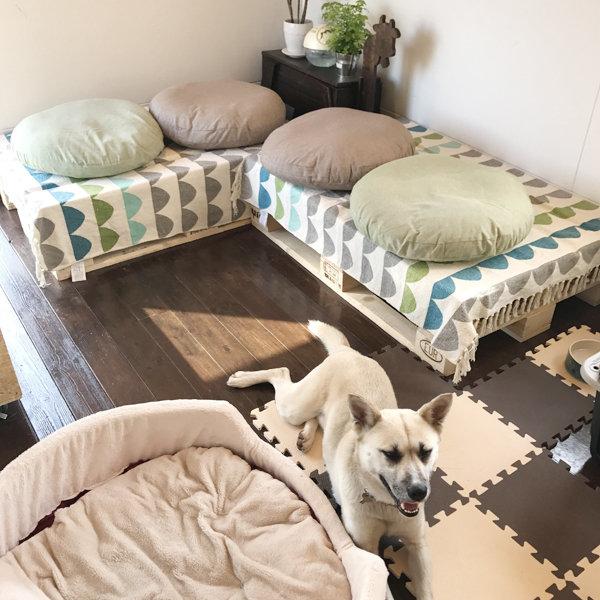 保護犬と出会えるカフェ キドックスカフェ [つくば市吉瀬/猫カフェ・動物カフェ]【いばナビ】