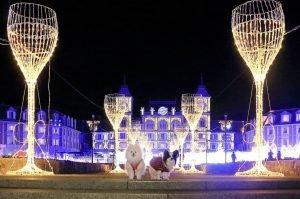 Kobe Illuminage -
