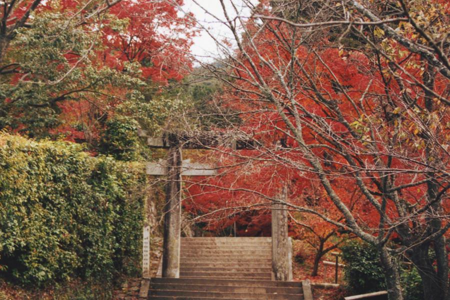 仁比山神社の紅葉 | たびらい
