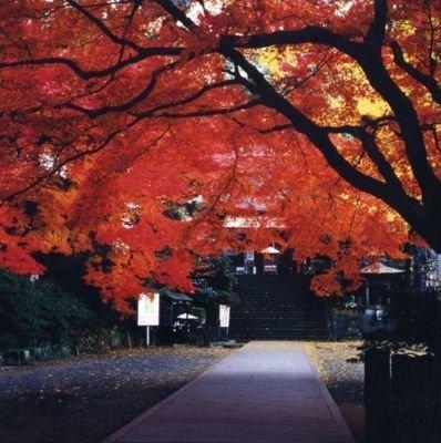 大興善寺の紅葉情報 |ウォーカープラス