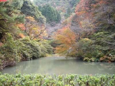 陶山神社の紅葉情報 |ウォーカープラス