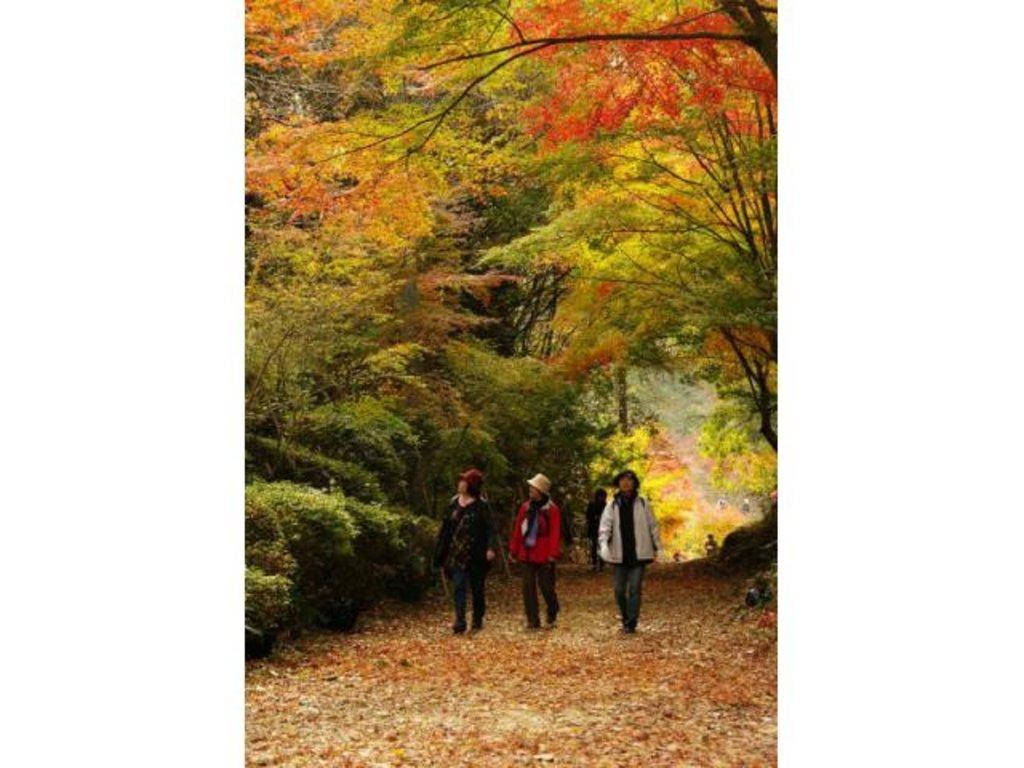 【泉山磁石場の紅葉】アクセス・イベント情報 - じゃらんnet