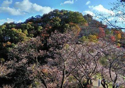桜山公園の紅葉情報 |ウォーカープラスの紅葉名所