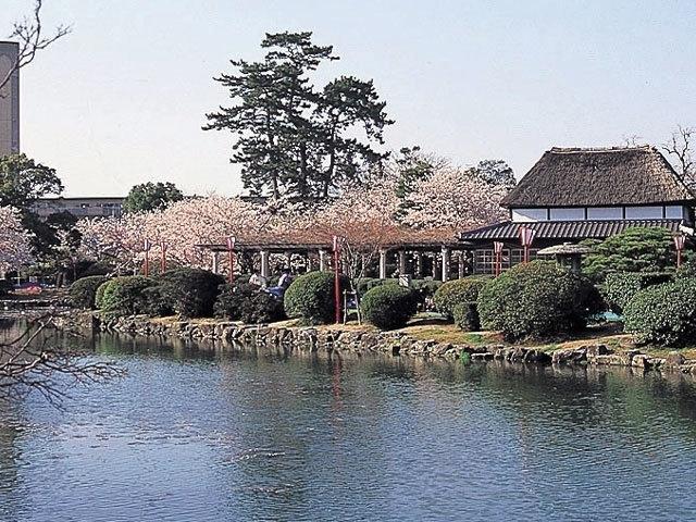 神野公園の桜|花見特集